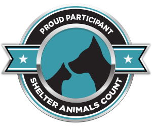 Shelter Animal Count